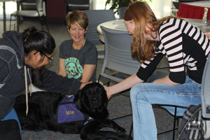 Students pet therapy dogs at Destress Fest at CentreTech