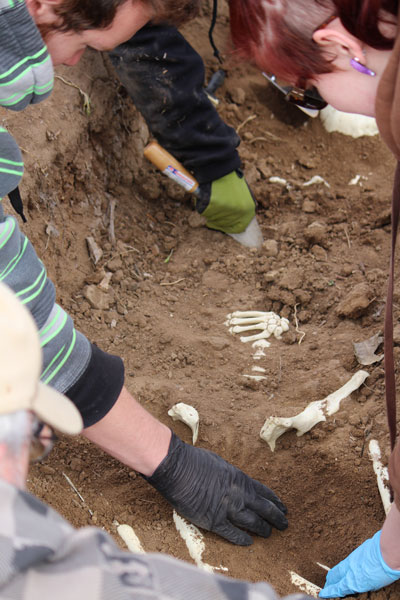 CCA students wipe some dirt off of some bones during CSI: Aurora